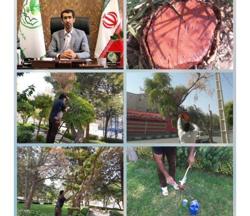 آغاز عملیات مبارزه با بیماری فوزاریوم درختان اقاقیا در شهر کرمانشاه